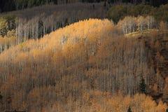Бабье лето в Колорадо стоковое изображение