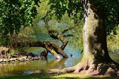 Бабье лето в парке Стоковое Изображение