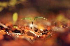 Бабье лето с зеленым ростком Стоковые Фотографии RF