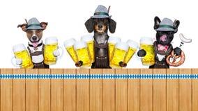 Баварская строка собак пива стоковая фотография rf