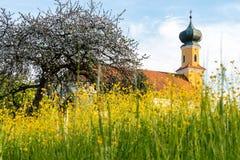 Баварская церковь увиденная до конца зацветая лугу стоковые фото