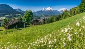 Баварские Альпы с красивыми цветками и Watzmann в весеннем времени, Баварии, Германии Стоковое Изображение