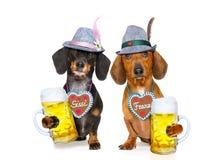 Баварские собаки сосиски таксы пива, пары 2 стоковое фото rf