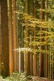 Баварский лес Стоковые Фотографии RF