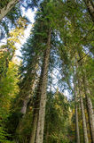 Баварский лес стоковое изображение rf