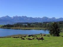 баварский ландшафт стоковое фото