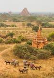 Багги лошади Bagan стоковые изображения rf