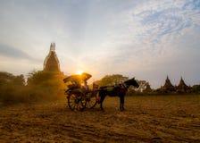 Багги лошади Bagan Стоковое фото RF