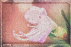 Багульник, имитация предпосылки картины акварели, пастельный покрашенный фильтр Стоковые Фотографии RF