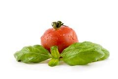 базилик изолировал белизну томата Стоковое Изображение