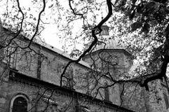 Базилика через ветви дерева Стоковое Изображение