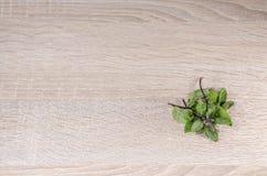 базилик свежий Стоковая Фотография
