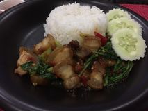 Базилик свинины риса кудрявый Стоковое фото RF