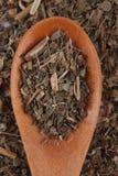 базилик сухой Стоковая Фотография