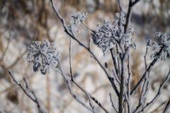 базовые элементы предпосылки собрали зиму картин стоковое фото