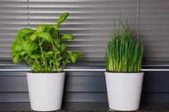 2 бака с травами в кухне Стоковые Изображения