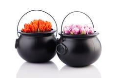 2 бака с цветками тюльпана Стоковое Фото
