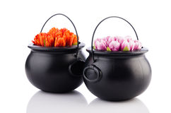 2 бака с цветками тюльпана Стоковая Фотография