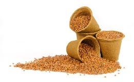 4 бака торфа заполненного с семенами radis Стоковые Фотографии RF