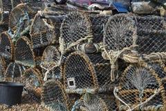 Баки омара в ряд Стоковое Фото