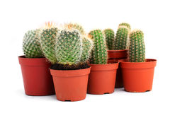 баки собрания кактусов Стоковое Фото
