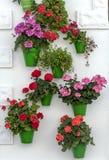 Баки с красочными цветками Стоковые Изображения
