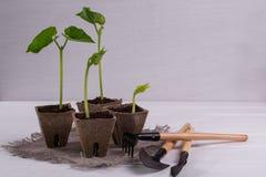 Баки с молодыми саженцами и маленькими садовыми инструментами Стоковое Изображение