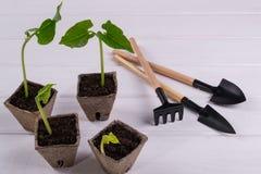 Баки с молодыми саженцами и маленькими садовыми инструментами Стоковое Фото