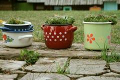 Баки с цветками Стоковое Изображение RF