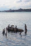 Бакланы Стамбула в море стоковая фотография