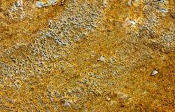 бактериальная текстура Стоковое Изображение