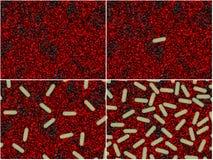 бактериальные этапы иллюстрация штока