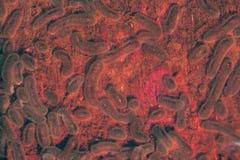 Бактерии, бактериальные микробы колонии, бактерии салмонелл Стоковое Изображение