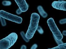 бактерии закрывают вверх Стоковое Изображение