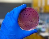 бактерии Стоковые Фото
