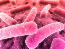 бактерии Стоковое Фото