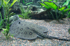 бак аквариума Стоковое Изображение