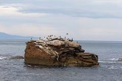 Бакланы на скалистом острове Стоковые Фотографии RF