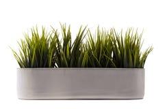 бак зеленого цвета травы Стоковые Фотографии RF