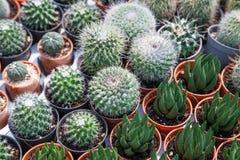 бак изолированный кактусом Стоковые Изображения