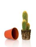 бак кактуса пустой potted Стоковые Фотографии RF