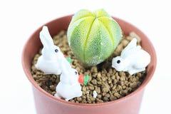Бак кактуса с кроликом стоковое изображение rf