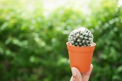 Бак кактуса с предпосылкой листьев Стоковые Изображения RF