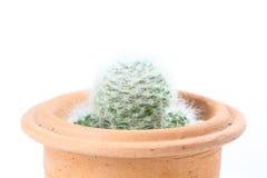 Бак кактуса стоковые изображения