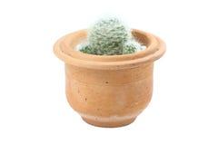 Бак кактуса стоковое изображение rf