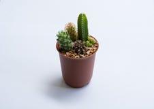 Бак кактуса Стоковое Изображение