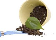 бак листьев грязи Стоковые Фото