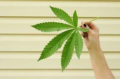 бак листьев Стоковые Изображения RF