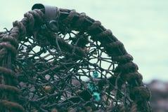 Бак омара или крупный план клетки Стоковые Изображения RF