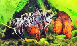 бак рыб Стоковые Изображения RF
